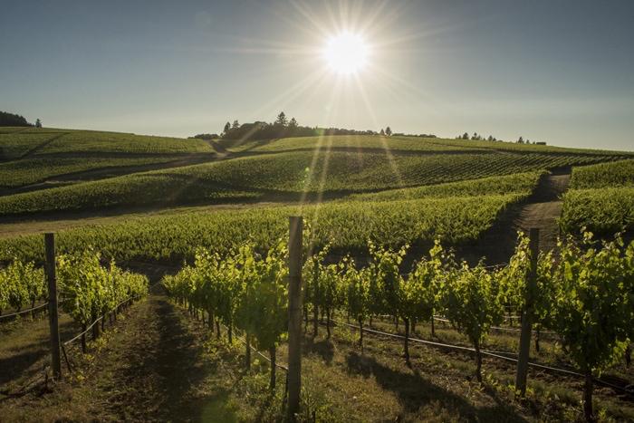 7 Beautiful Vineyard Views In The Willamette Valley Travel Oregon Traveloregon 7 Beautiful Vineyard Views In The Willamette Valley Travel Oregon 2020