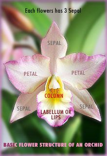 Learn About How To Care For An Orchid I Need All The Help I Can