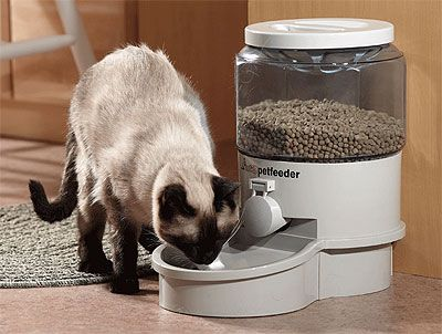 with understand problems food so feeder cat dispenser feeding if pros can cats the feeders and for you types cons pet free automatic associated