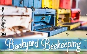 How to Raise Honey Bees in Town: Backyard Beekeeping ...