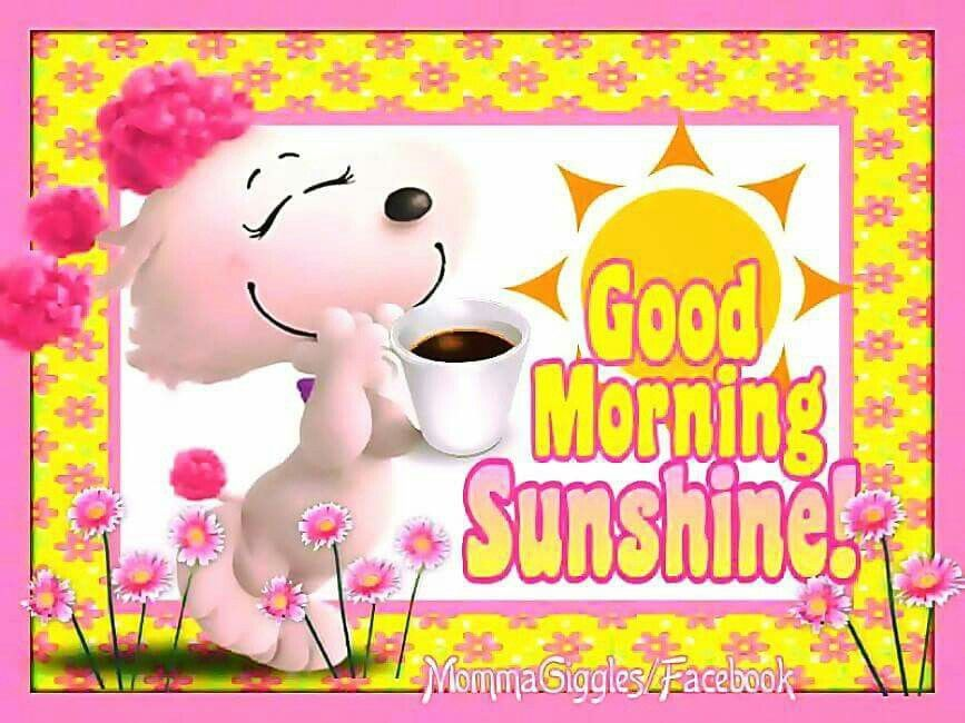 Good Morning Sunshine Quotes: Cute Good Morning Sunshine Image Quote Pictures, Photos