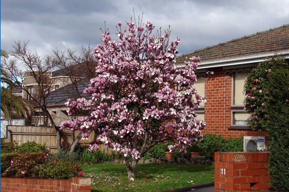 Best Trees To Grow Curb Appeal Love These Pins Trees To Plant