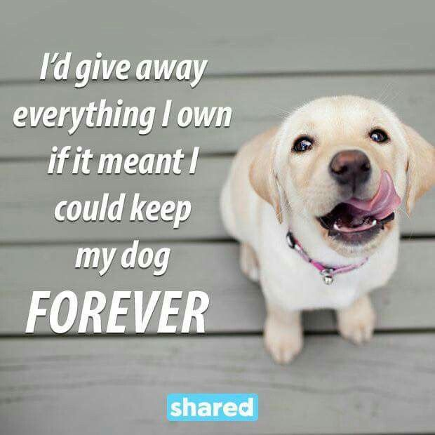 In A Heartbeat Miss You So Much Gracie Mae Dog Quotes Dogs