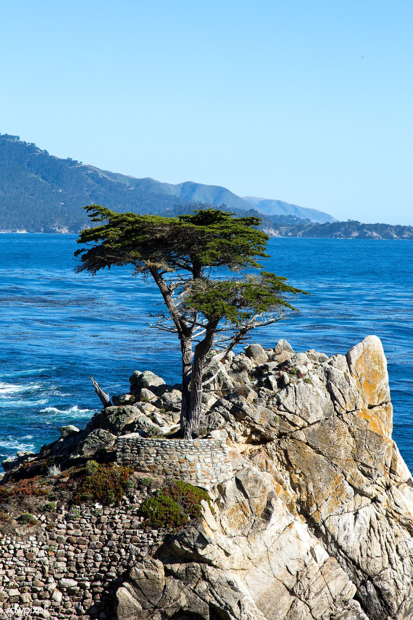 Lone Cypress On The 17 Mile Drive 17 Mile Drive Is A Scenic Road Through Pacific Grove And Pebb In 2020 California Travel Road Trips Scenic Roads California Coastline