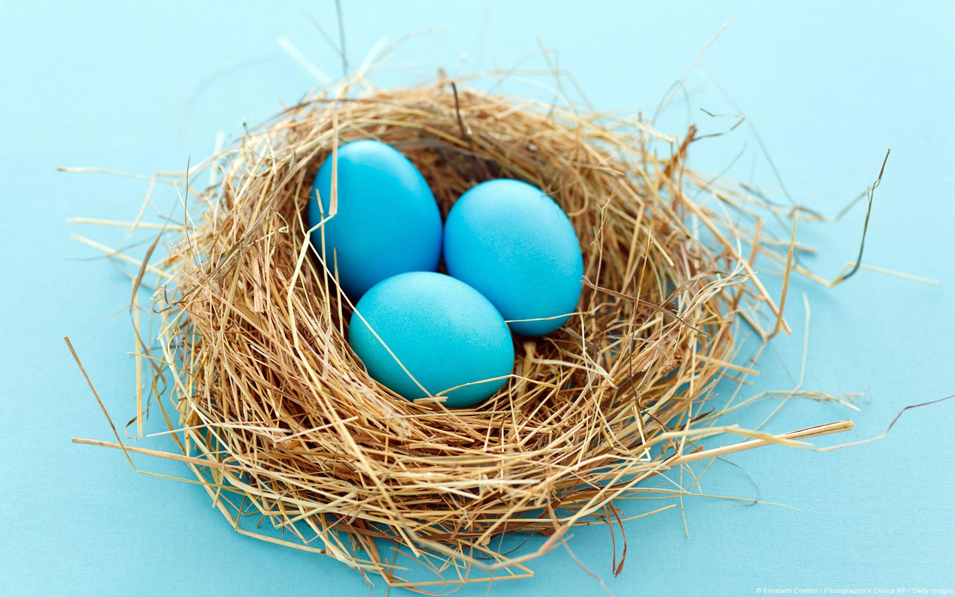 18990 En 1 1920 1200 Blue Eggs Egg Nest Iphone 5s