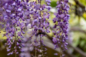Schattenpflanzen: 16 Pflanzen für den Schatten in Ihrem Garten - Plantura
