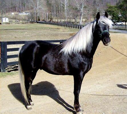 Black Horse White Mane And Tail You Kidding Me Horsen Stuff