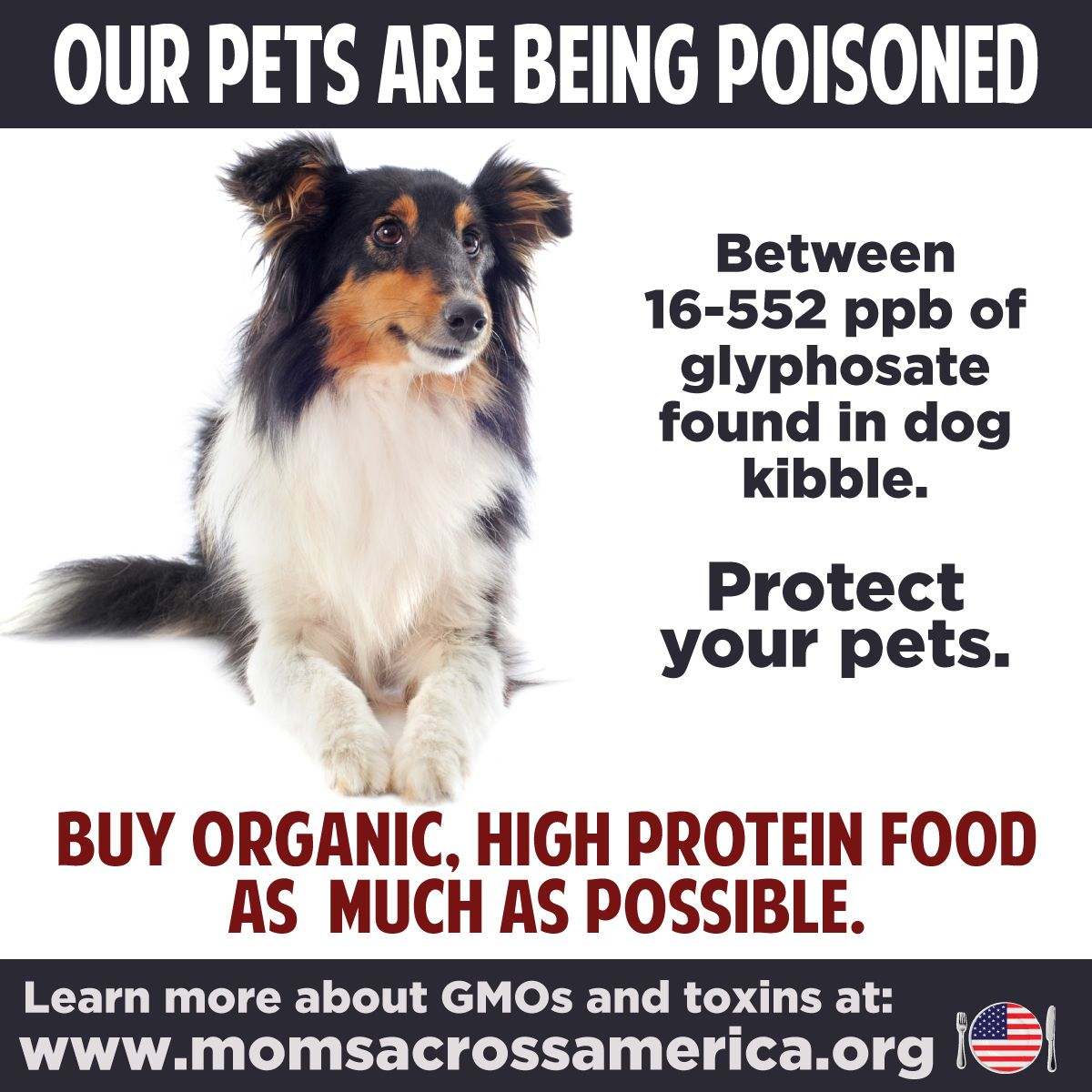 Protect Your Pets Avoid Poison In Pet Food And Your Neighborhood
