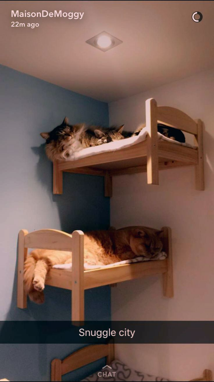 Cat Room Decorating Ideas In 2020 Cat Bunk Beds