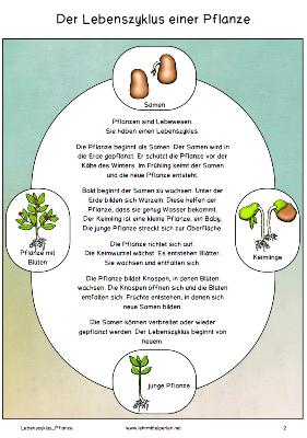 Bloghop Frühling: Lebenszyklus Pflanze Sachtext und Spiel ...