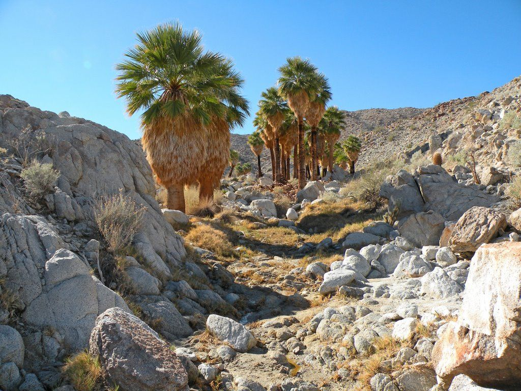 Mountain Palm Canyon Anza Borrego Desert State Park State Parks Anza Borrego State Park Borrego Springs,Most Googled Question In Each State