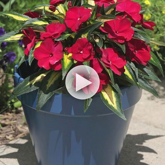 Watch Painted Flower Pots That Last In The Better Homes And Gardens Video Crafts Pinterest