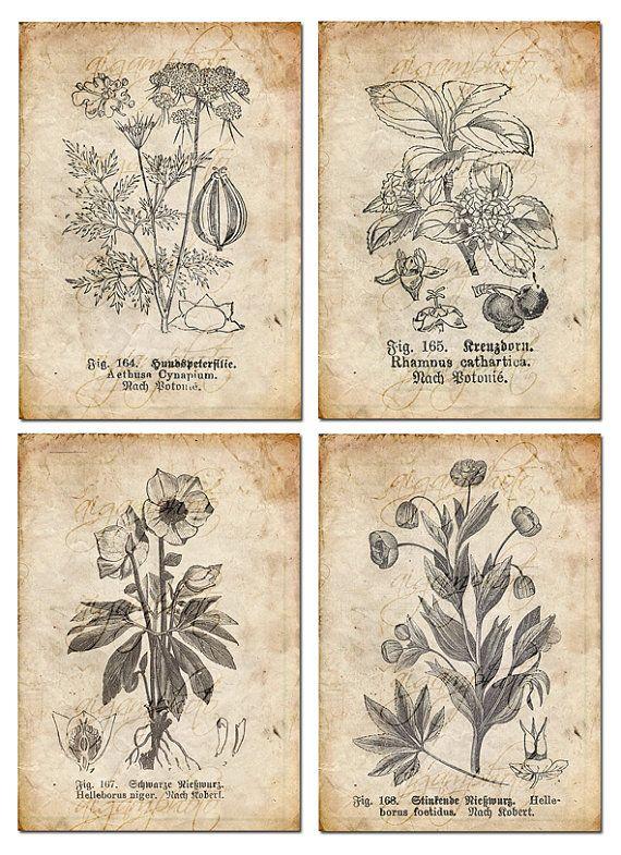 Botánico Vintage floral, plantas, papel antiguo, dibujo, juego de ...