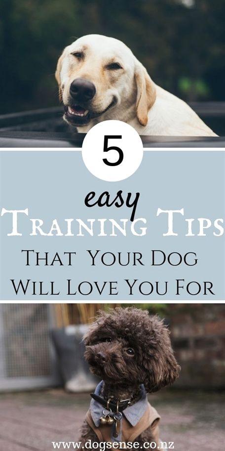 Dog Training Long Line Dog Training Zoom Room Dog Training 33579