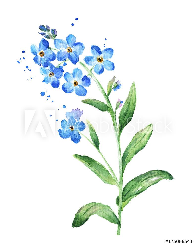 Niezapominajka Szukaj W Google In 2020 Watercolor Tattoo Flower Watercolor Flowers Flower Drawing