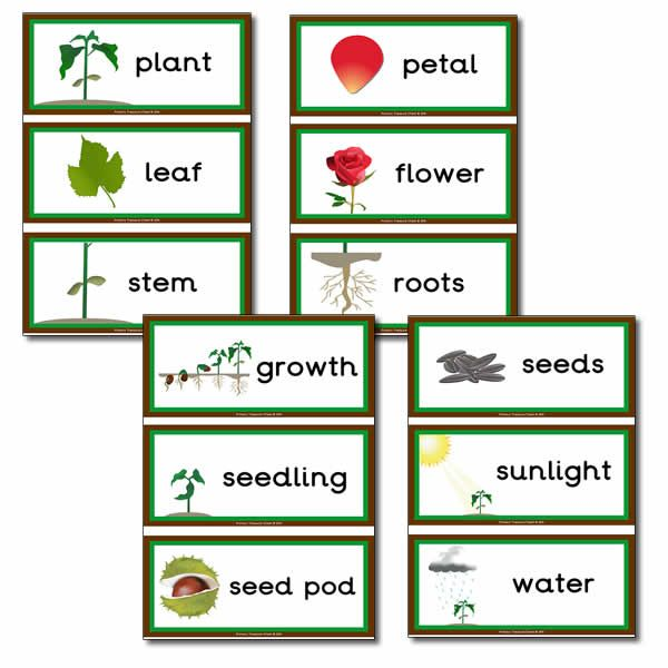 Plant life themed flashcard ey in the garden plants for Gardening tools vocabulary