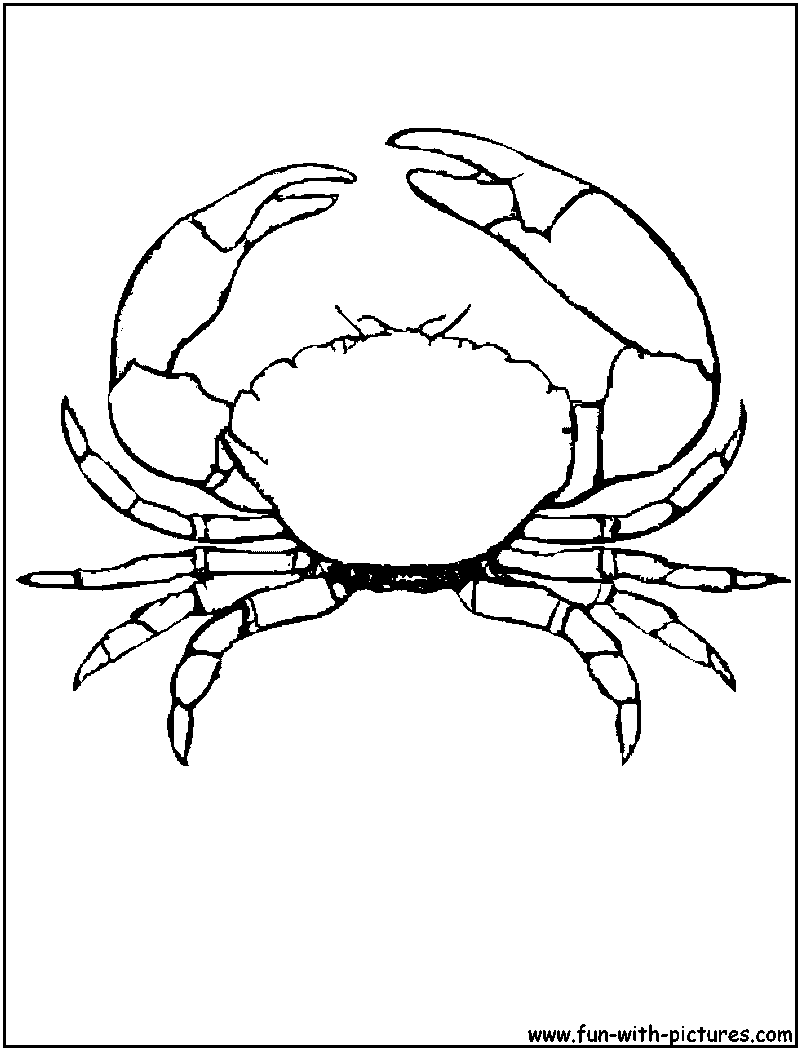 - Stone Crab Coloring Page Coloring Pages, Animal Coloring Pages, Fish Coloring  Page