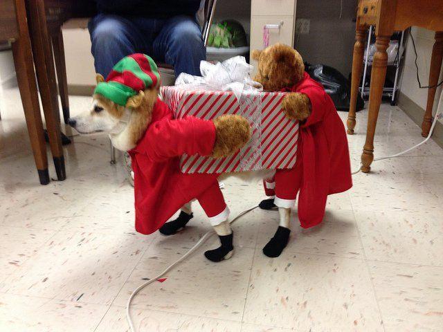 Fox Dog Costume With Images Christmas Dog Costume Dog