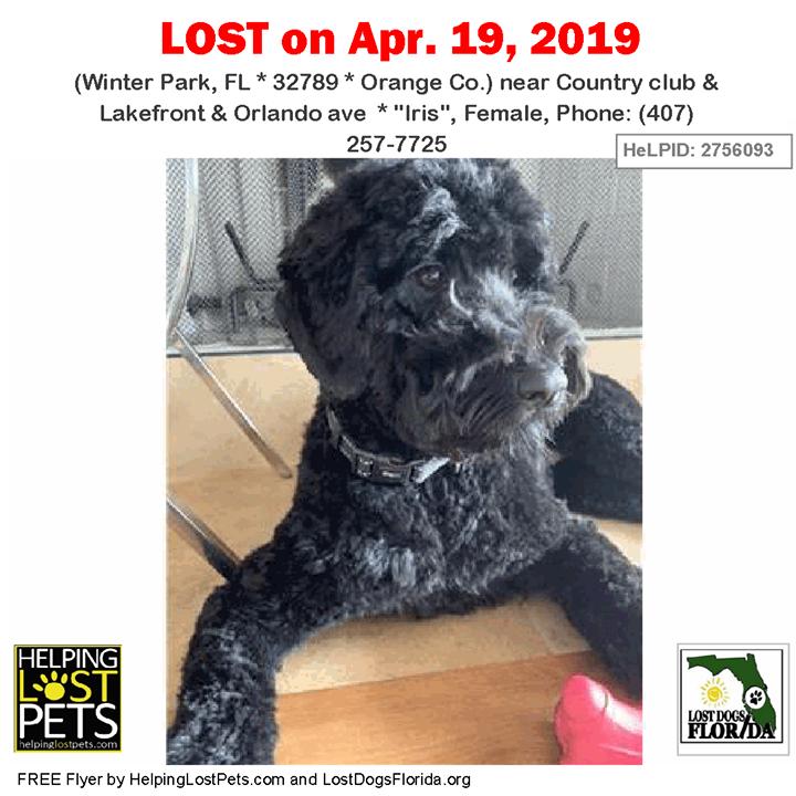 Have you seen this lost dog? LOSTDOG Iris WinterPark