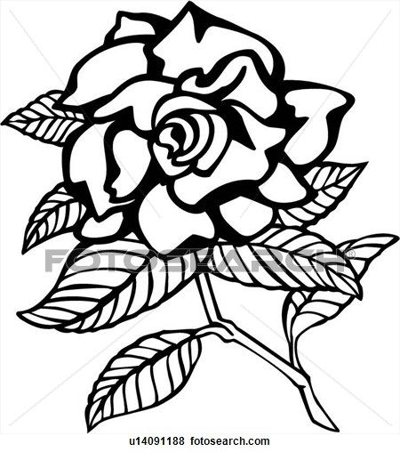 Clip Art Of Flower Gardenia Varieties U14091188 Search Clipart Illustration Posters Drawings And Eps V Flower Graphic Drawings Illustrations Posters