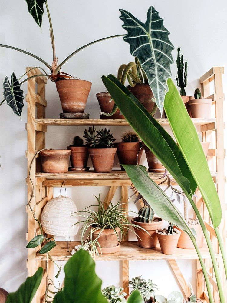 The Best Feng Shui Plants For Positive Energy In 2020 Feng Shui Plants Plant Decor Indoor Lucky Bamboo Plants #plants #in #living #room #feng #shui