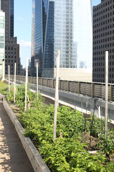 Rooftop Garden or Not, North End Grill Doesn\'t Want to Be the Blue ...