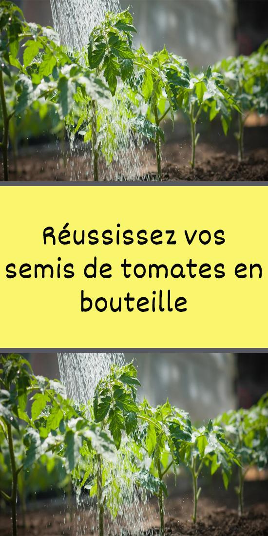 Réussissez vos semis de tomates en bouteille en 2020