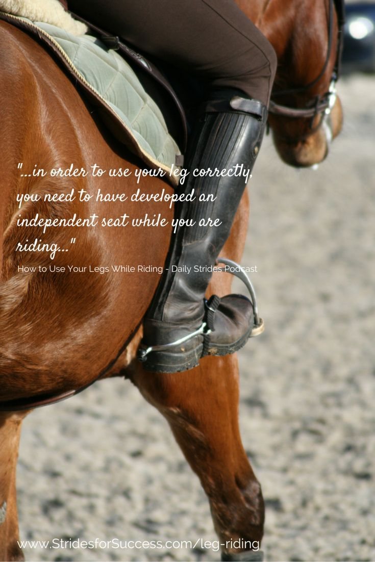 Different Equestrian Supplies You Should Have With on