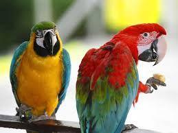 schattige en of leuke dieren