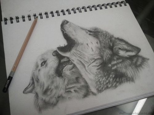Best wolf sketches images on pinterest wolf sketch-4297