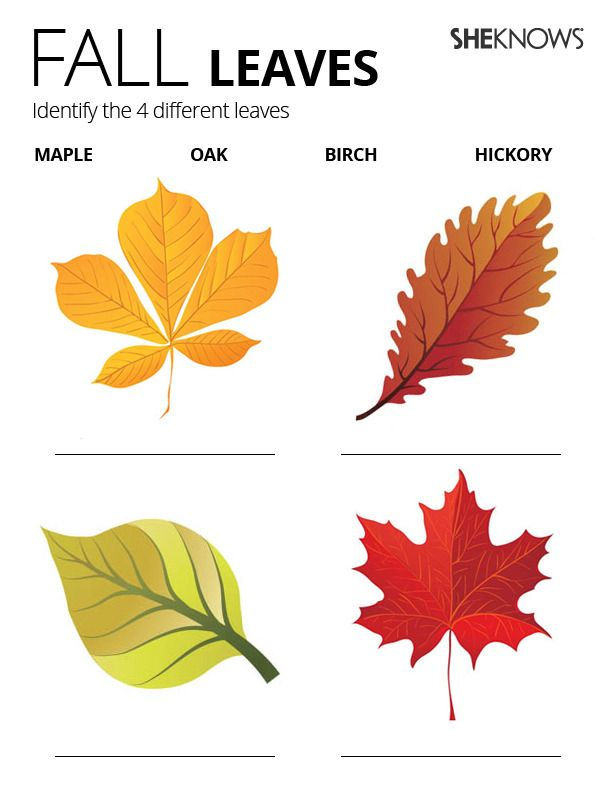 Identify fall leaves  Free Printable Coloring Pages  Montessori