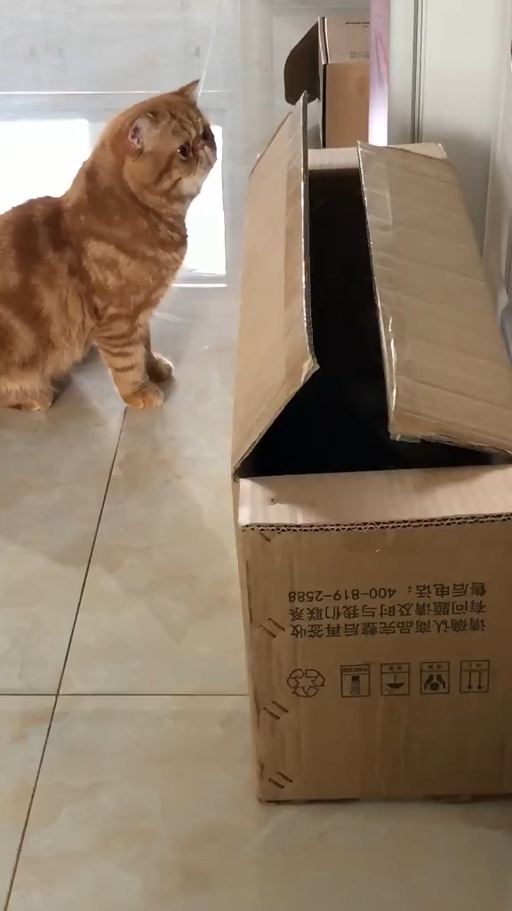 The cat hiding in the box is afraid to come out. – Funny videos