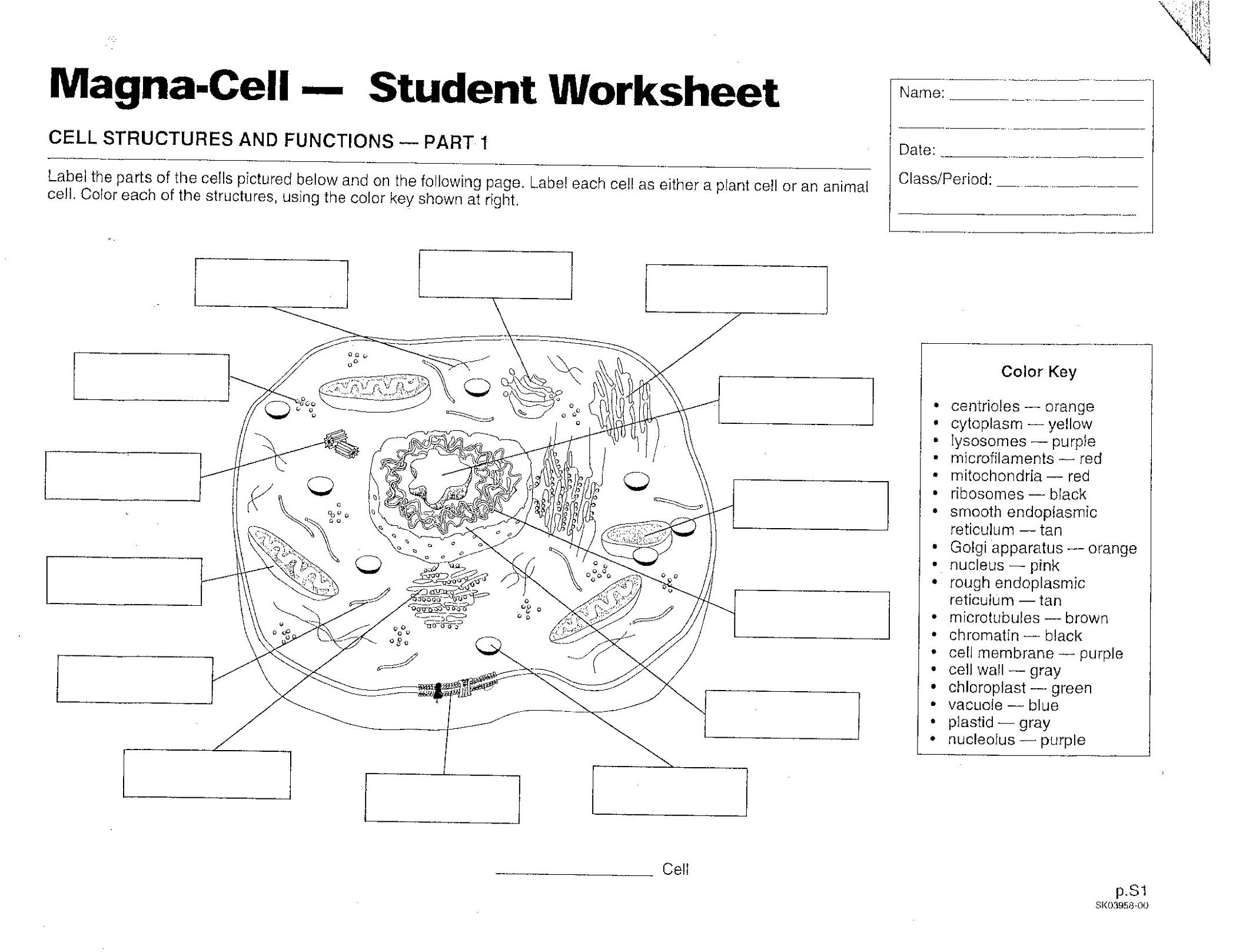 Plant And Animal Cell Diagrams Cells Worksheet Plant Cells
