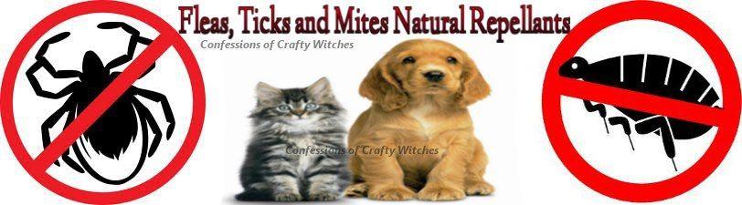 Fleas, Ticks and Mites Repellants http://herbalhealthcare-daw.blogspot.com/2013/04/fleas-ticks-and-mites-repellants.html