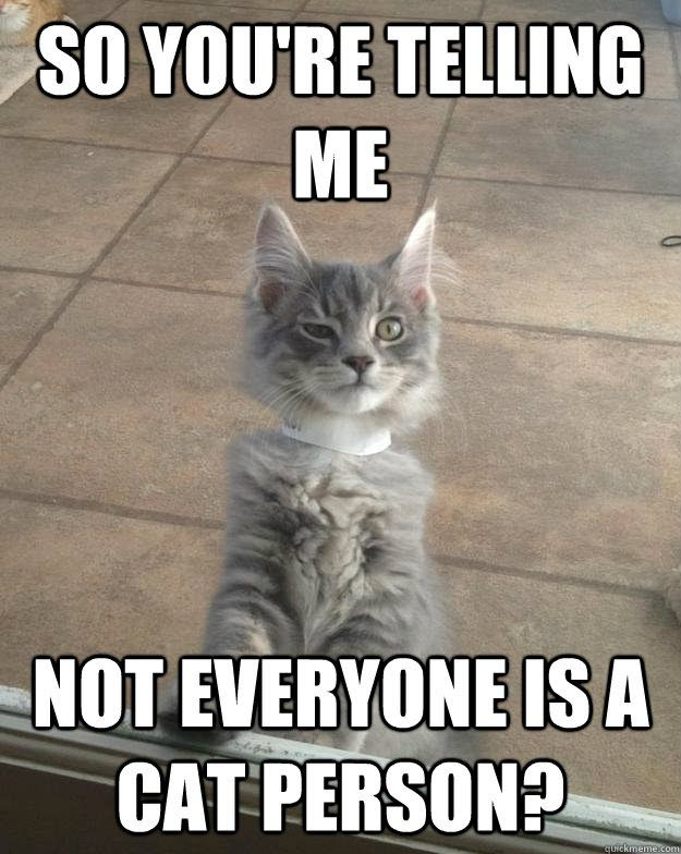 Not Funny Cat Meme : I m not saying it was aliens cat google search bored