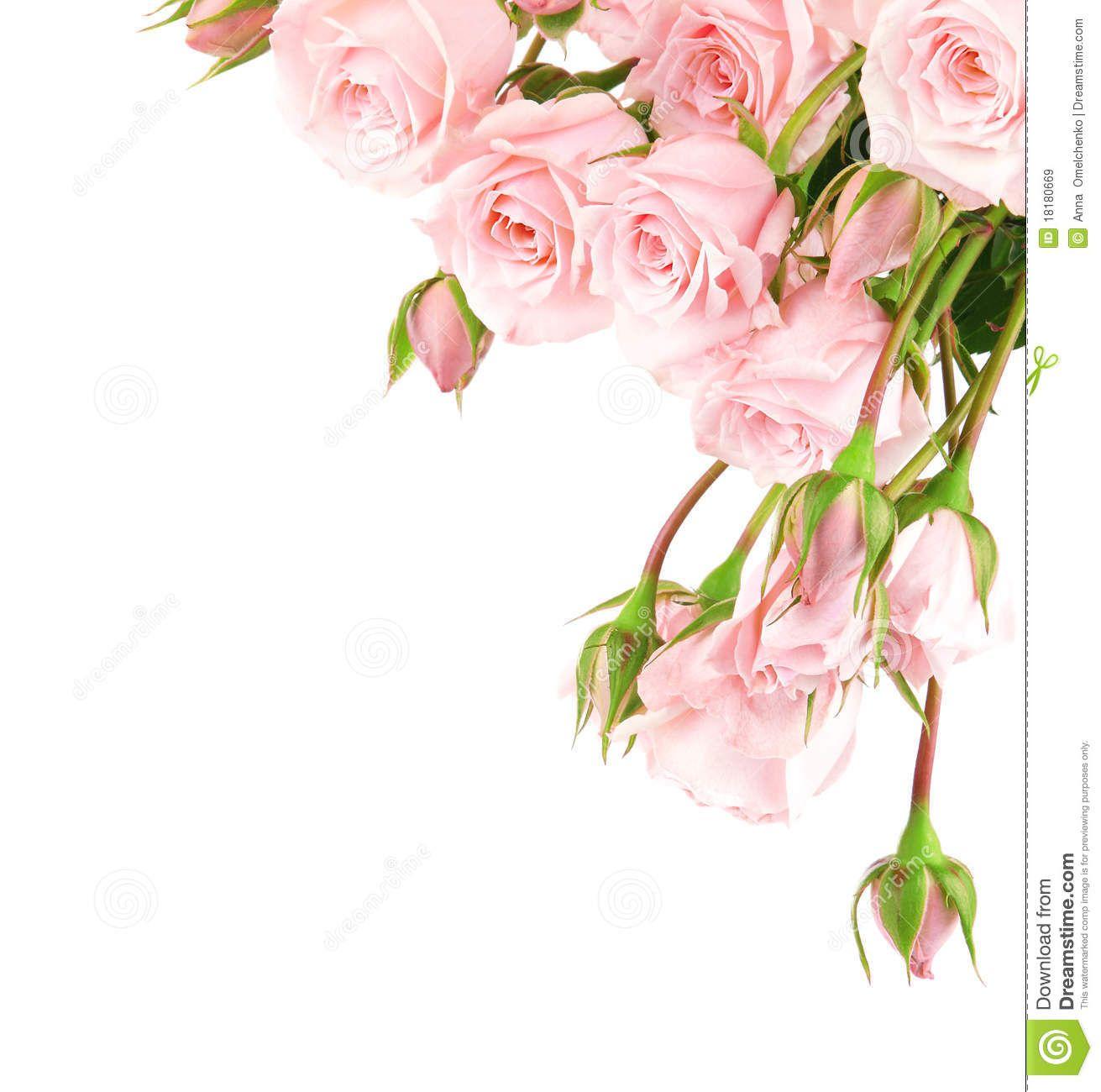 Pink Roses Border Clipart Fresh Pink Roses Border Flower Border