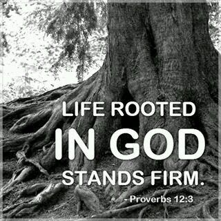 Walk By Faith Not By Sight: Life Rooted In God Stands Firm