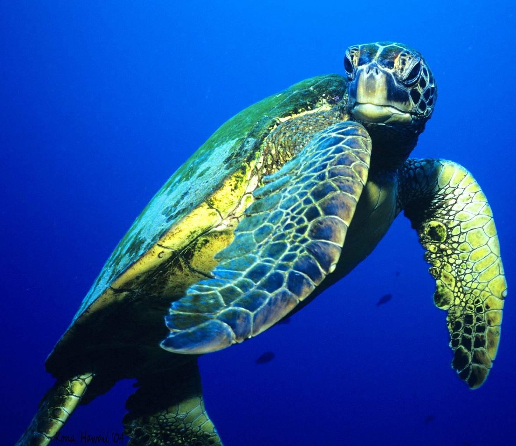 Beautiful Sea Turtle Sea Turtle Turtle Tortoise Turtle