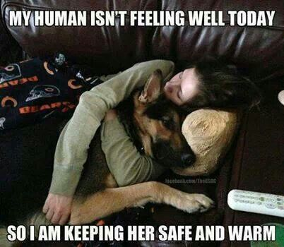 Can Female Dogs Be Used For Protection