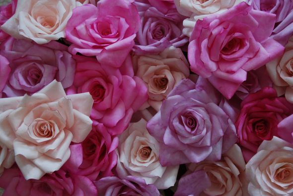 Coffee Filter Roses Perfect Colors YAY OMG Can Not Wait To Put