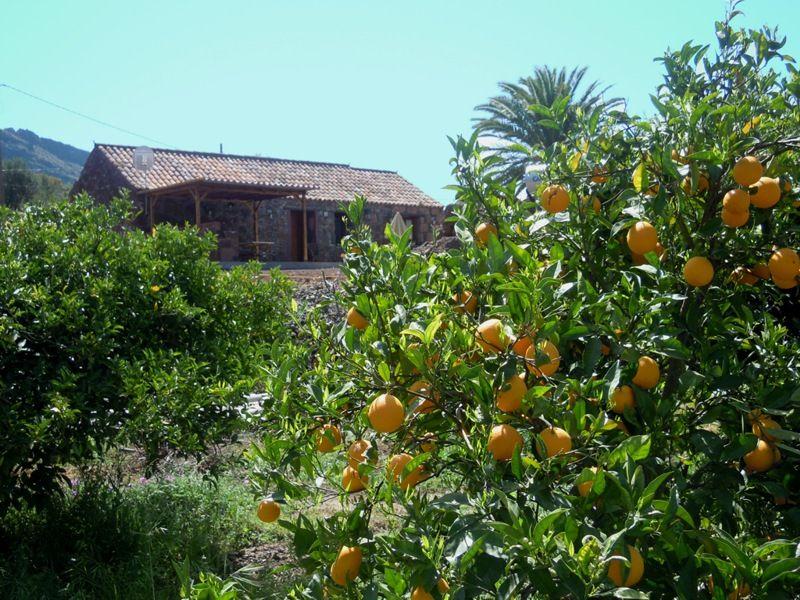 LA FUENTE DE LA FLORA (Las Palmas)