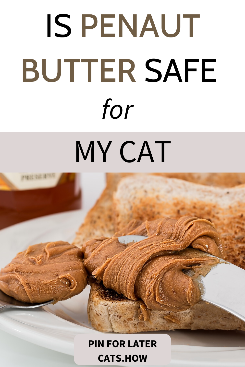 Can Cats Eat Peanut Butter in 2020 Best cat food, Cat
