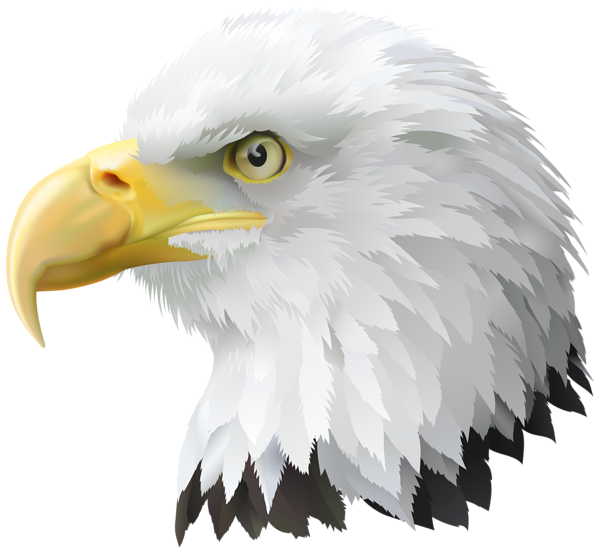 Transparent Bald Eagles Clipart Roosting Eagle Hd Png Download Is Free Transparent Png Image Download And Use It For Your Personal Bald Eagle Eagle Eagles