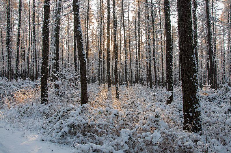 Winterzauber | by berndtolksdorf1