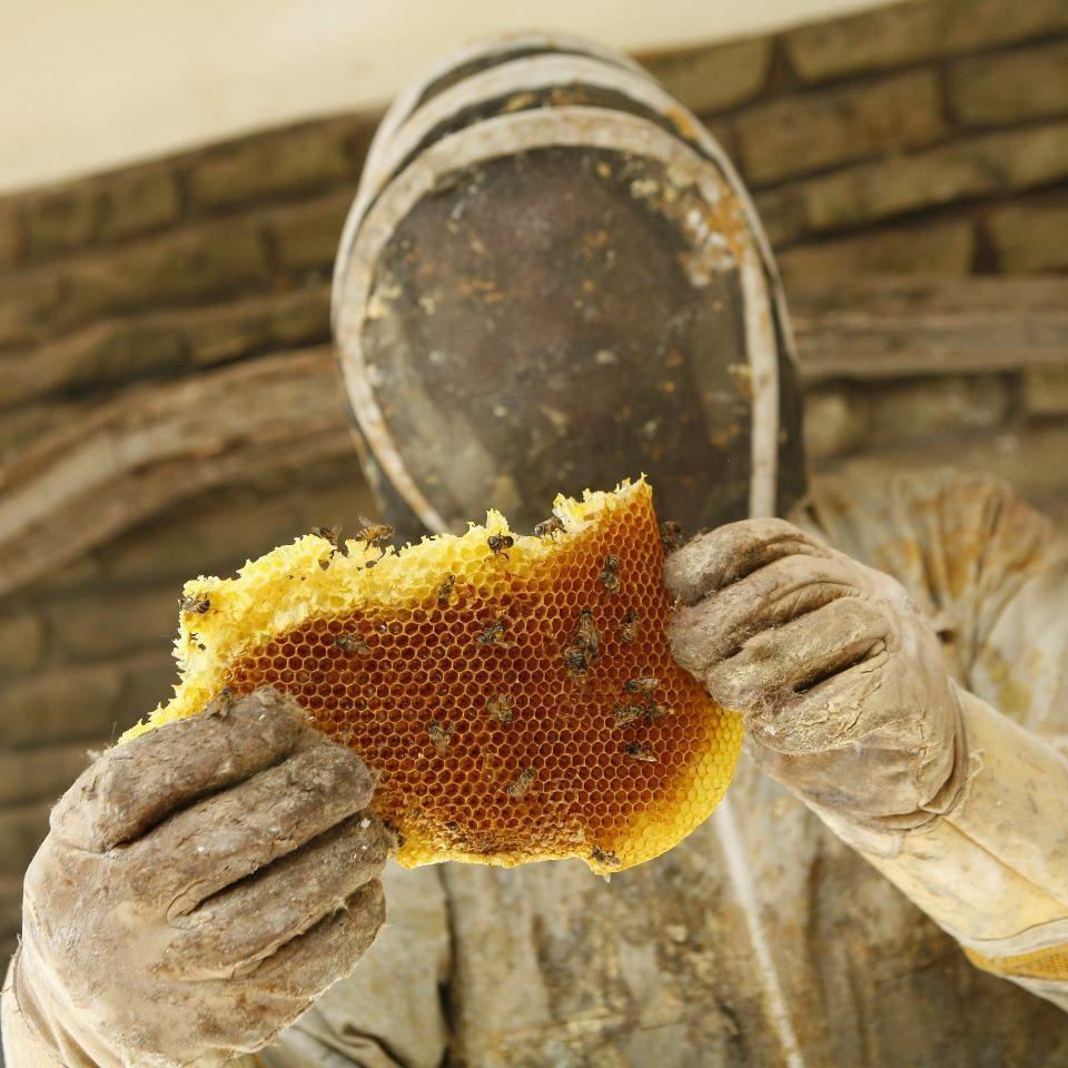 meet the killer bee guy bees honey and beekeeping