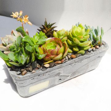 Lovely concrete planter with succulents