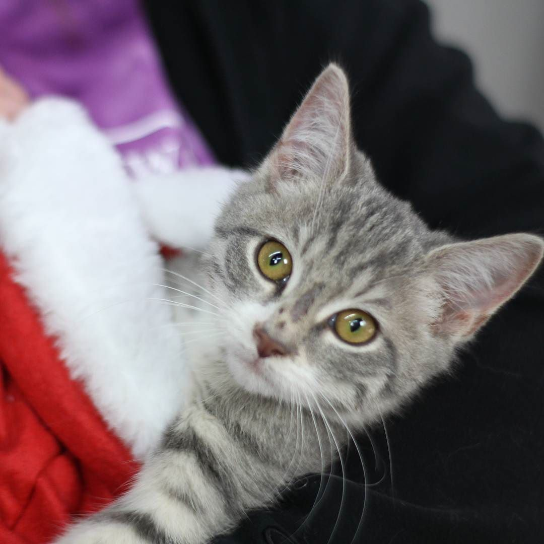 It S December Kitten Clinic And The Cuteness Knows No Bounds Tiny Mistletoe Is A New Recue From Lee County Having Her First C Cat S Kittens Cats Of Instagram