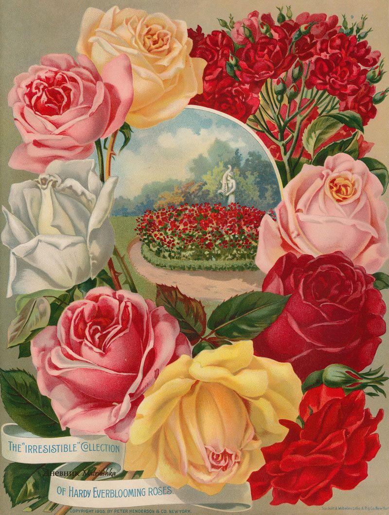 Открытки с цветами каталог, дня