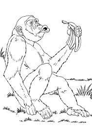 coloriage coloriage bonobo pinterest singes dessin de singe