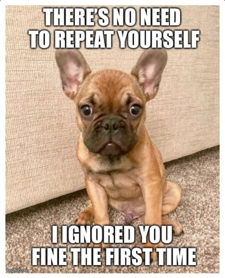 A Collection Of French Bulldog Memes French Bulldog Funny French Bulldog Breed French Bulldog Meme